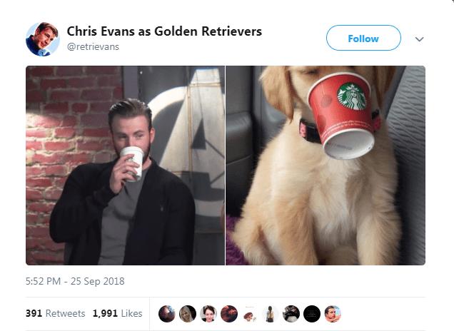 Photo caption - Chris Evans as Golden Retrievers Follow @retrievans 5:52 PM - 25 Sep 2018 391 Retweets 1,991 Likes