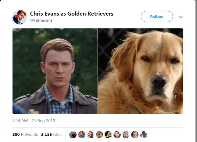 Dog breed - Chris Evans as Golden Retrievers Follow @retrievans 7:44 AM -27 Sep 2018 880 Retweets 3,155 Likes