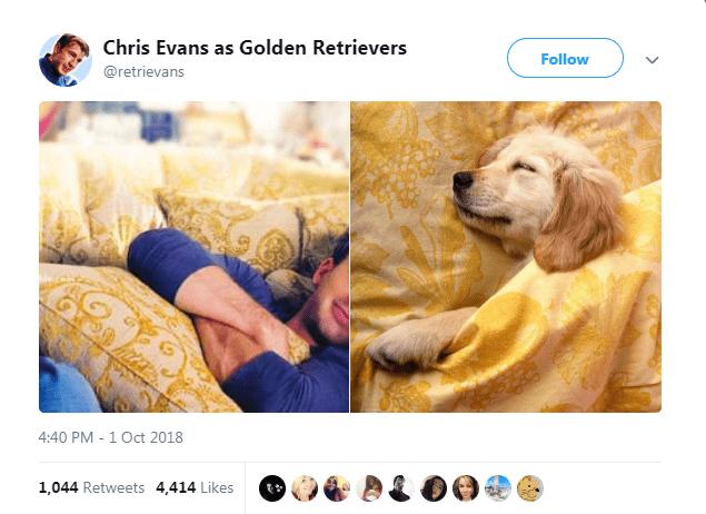 Dog - Chris Evans as Golden Retrievers Follow @retrievans 4:40 PM -1 Oct 2018