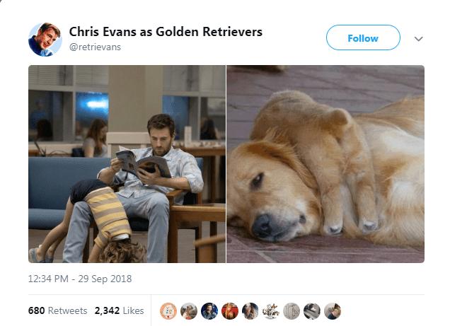 Dog - Chris Evans as Golden Retrievers Follow @retrievans 12:34 PM - 29 Sep 2018
