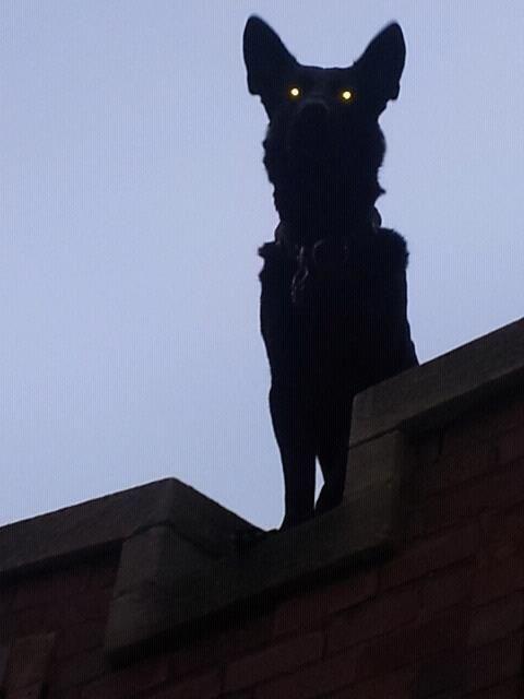 satanic ritual - Cat