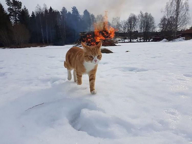 satanic ritual - Snow