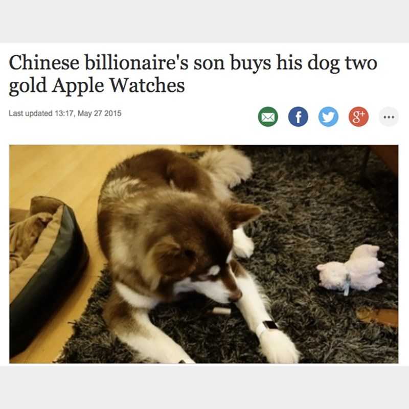 Canidae - Chinese billionaire's son buys his dog two gold Apple Watches Last updated 13:17, May 27 2015 f