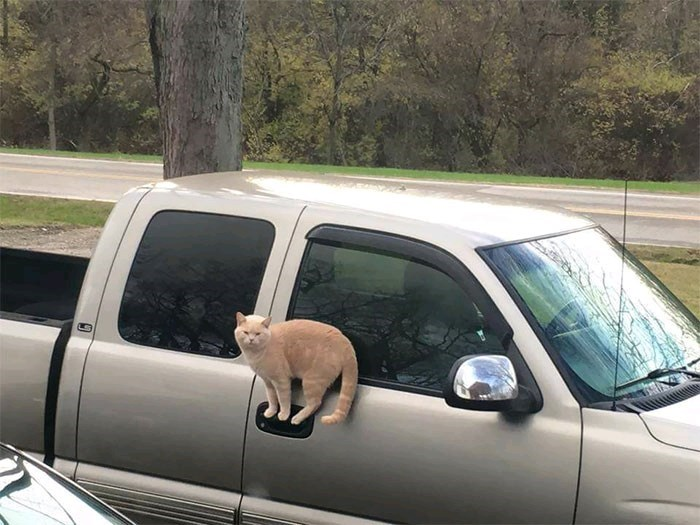 cat pic sitting on a car door handle