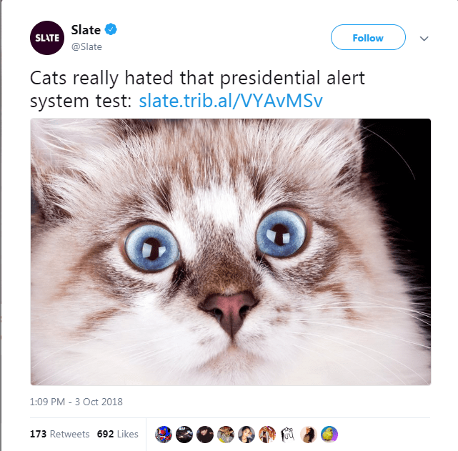 Cat - Slate SLATE Follow @Slate Cats really hated that presidential alert system test: slate.trib.al/VYAVM Sv 1:09 PM 3 Oct 2018 173 Retweets 692 Likes