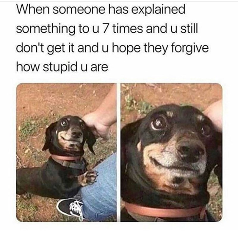 "Caption reads, ""When someone has explained something to you seven times and you still don't get it and you hope they forgive how stupid you are"" above pics of a cute dog wanting to be pet"