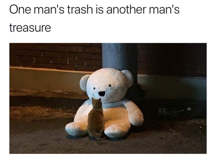 "Caption reads, ""One man's trash is another man's treasure"" above a pic of a cat looking at a big stuffed teddy bear"