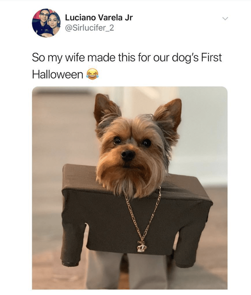 """Caption that reads, """"So my wife made this for our dog's first Halloween"""" above a pic of a little Yorkshire terrier with a costume on from the """"I Love it"""" music video by Kanye West and Lil Pump"""