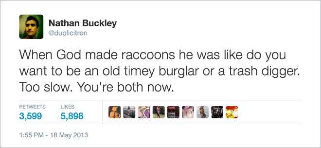 Text - Nathan Buckley @duplicitron When God made raccoons he was like do you want to be an old timey burglar or a trash digger. Too slow. You're both now. RETWEETS LIKES 3,599 5,898 1:55 PM 18 May 2013