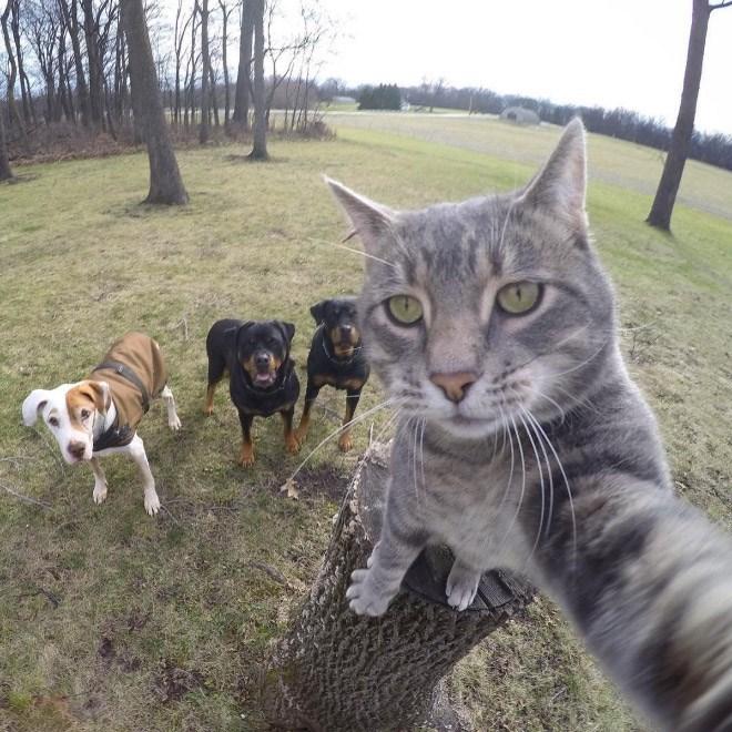 selfies - Mammal