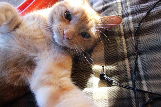 selfies - Cat