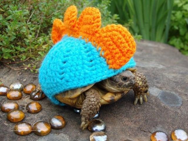 Tortoise - Kat e Hortad apete