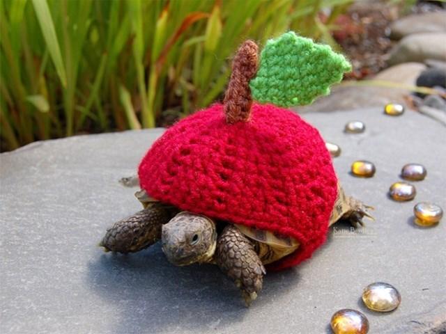 Tortoise - Katk Pe