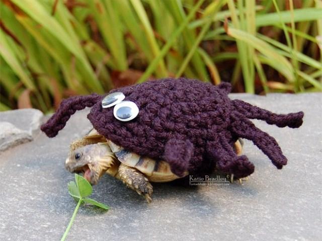 Crab - Katio Bradlen Tadd