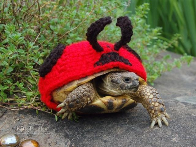 Tortoise - Badlea Tored