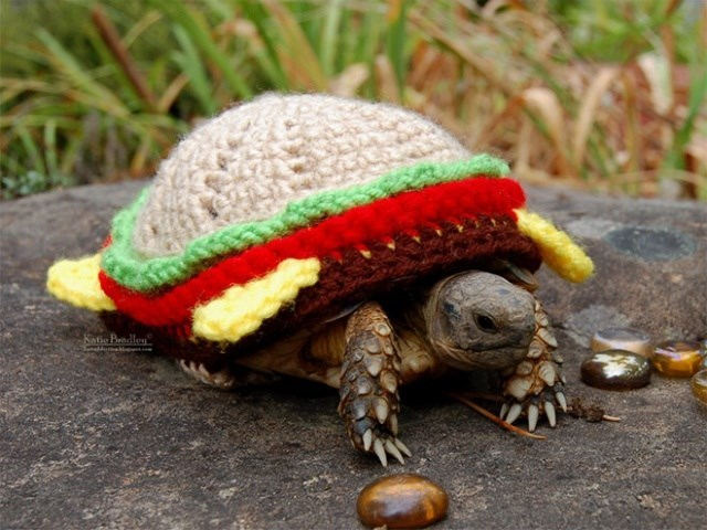 Tortoise - Katie Bedley edumebe