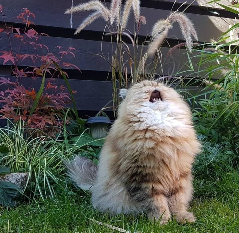 tabby cat allergies Fluffy cute sneeze fall - 9222833152