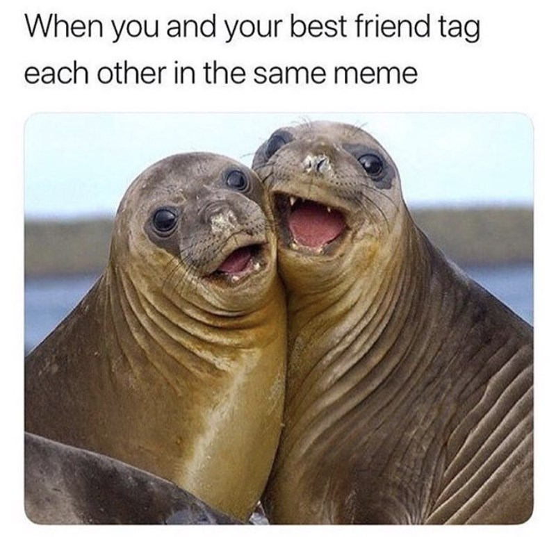 Seal - When you and your best friend tag each other in the same meme