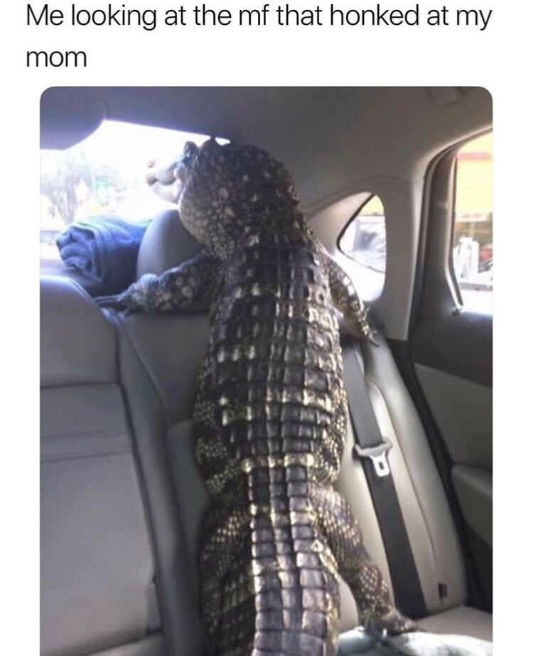 Reptile - Me looking at the mf that honked at my mom