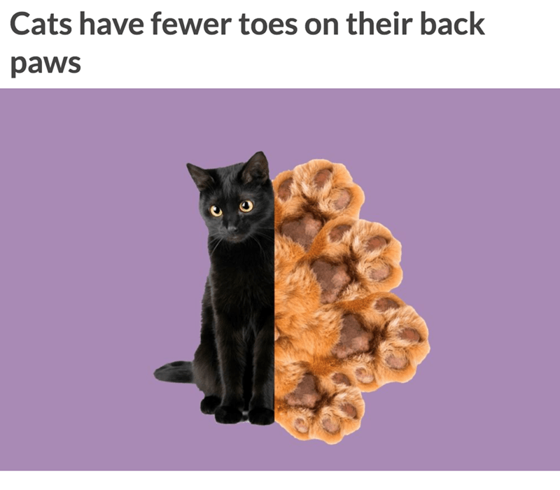 Cat - Cats have fewer toes on their back paws