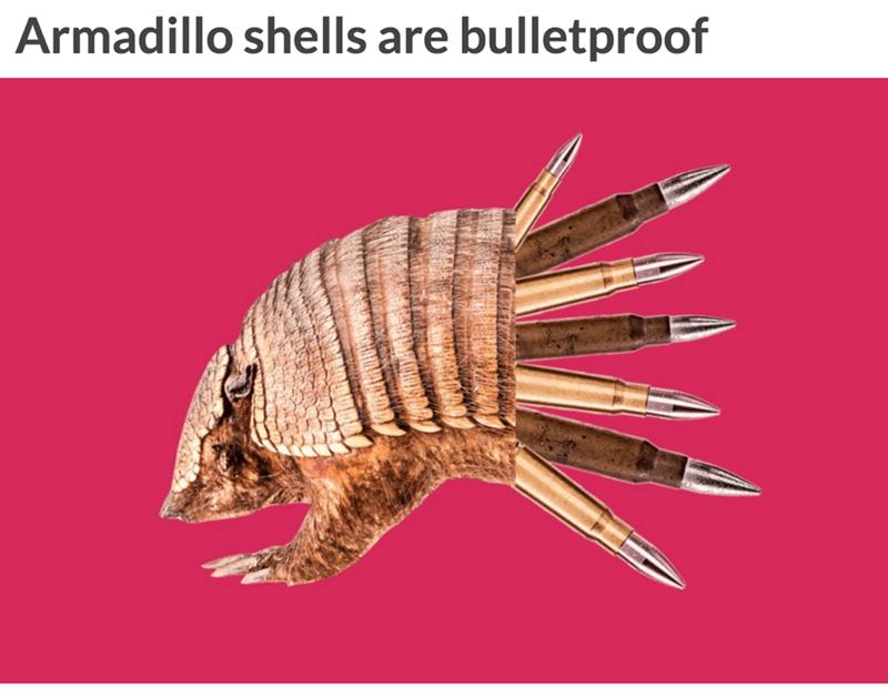 Organism - Armadillo shells are bulletproof