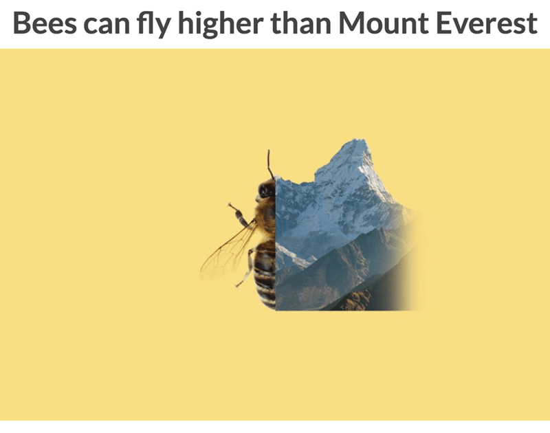 Text - Bees can fly higher than Mount Everest