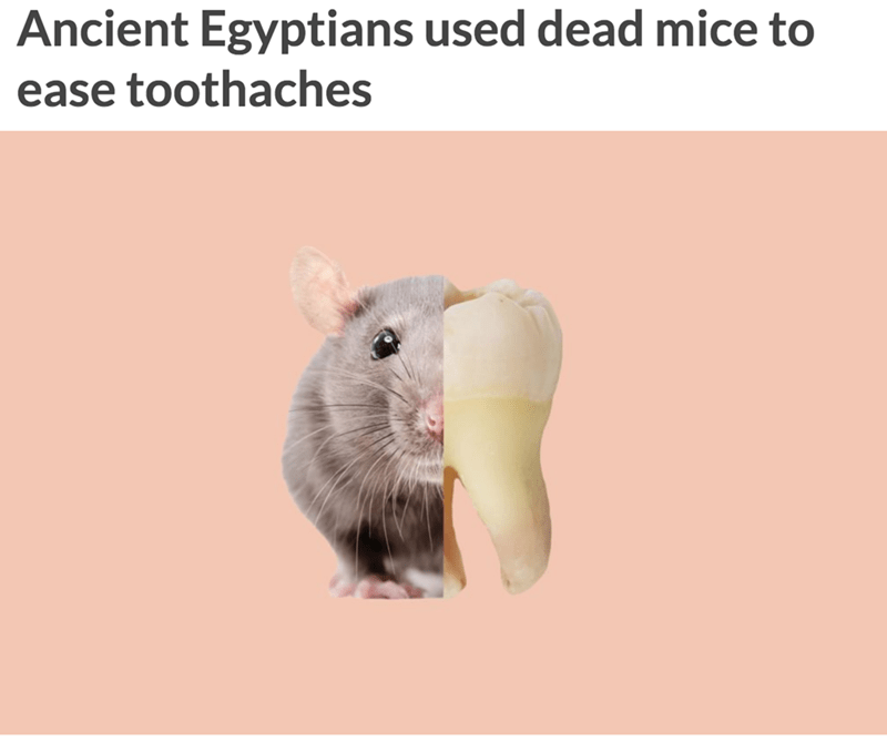 Hamster - Ancient Egyptians used dead mice to ease toothaches