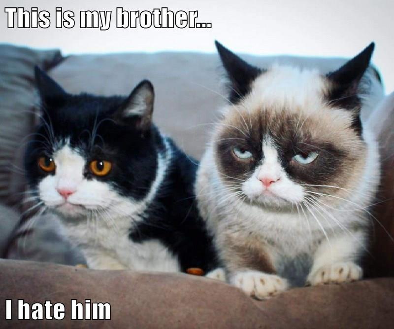 Grumpy Cat cat meme - 9222954240
