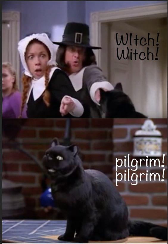 salem the cat - Photo caption - WItch! Witch! pilgrim! pilgrim!