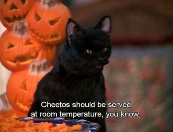 salem the cat - Cat - Cheetos should be served at room temperature, you know.