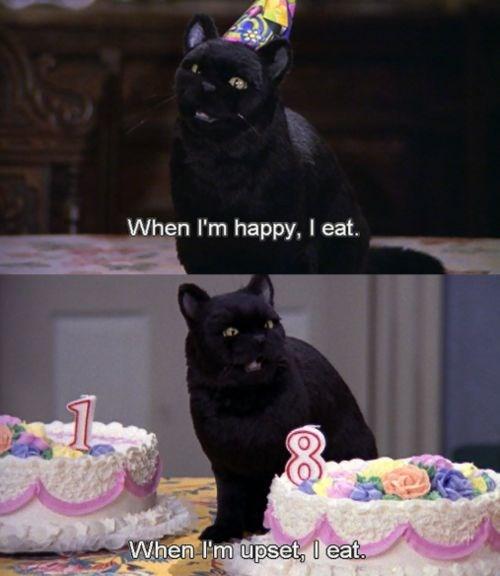 salem the cat - Cat - When I'm happy, I eat. When I'm upset, l eat