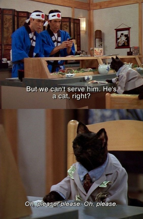 salem the cat - Photo caption - But we can't serve him. He's a cat, right? Oh, pleaser please. Oh, please.