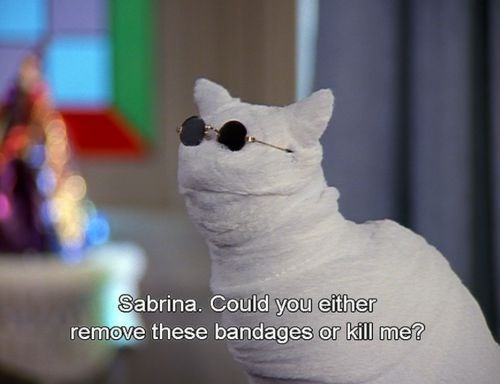 salem the cat - Cat - Sabrina. Could you either remove these bandages or kill me?