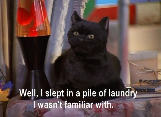 salem the cat - Cat - Well, I slept in a pile of laundry Iwasn't familiar with.