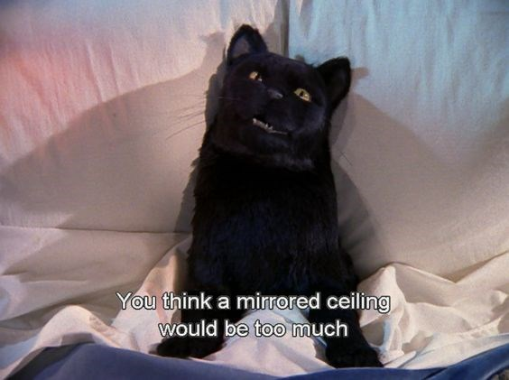 salem the cat - Cat - You think a mirrored ceiling would be too much