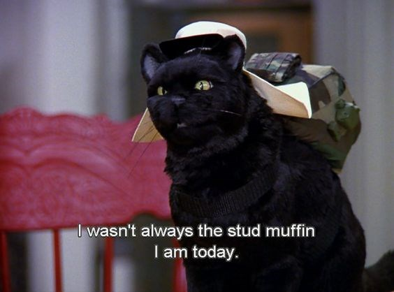 salem the cat - Cat - 1 wasn't always the stud muffin I am today.