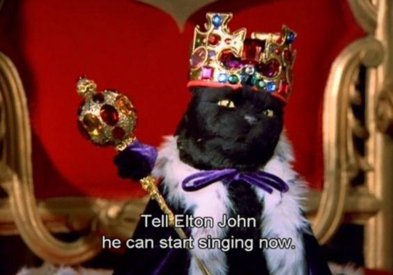 salem the cat - Purple - Tell Elton John he can start singing now.
