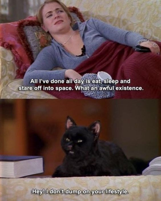 salem the cat - Cat - All I've done all day is eat, sleep and stare off into space. What an awful existence. Hey! I don't dump on your lifestyle.