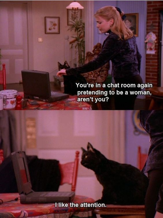 salem the cat - Cat - You're in a chat room again pretending to be a woman, aren't you? T like the attention.