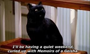 salem the cat - Cat - I'll be having a quiet weekend, Curled up with Memoirs of a Geisha.
