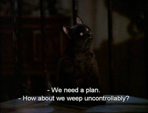 salem the cat - Cat - - We need a plan. - How about we weep uncontrollably?
