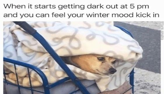 Dog - When it starts getting dark out at 5 pm and you can feel your winter mood kick in ank.sinalra