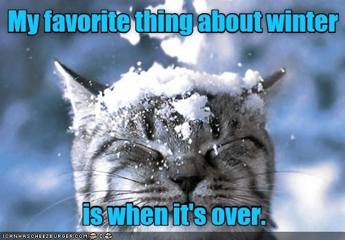 Cat - My favorite thing about winter is when it's over. 1CANHASCHEEZEURGER COM