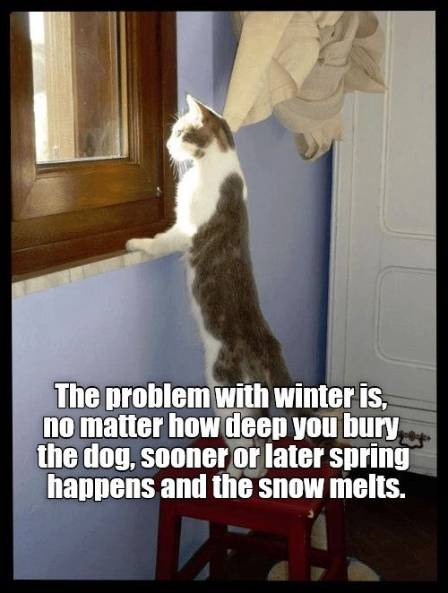 Cat - The problem with winter is, no matter howdeep you bury the dog, sooner or later spring happens and the snow melts.
