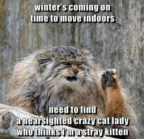 Photo caption - winter's coming on time to move indoors need to find a nearsighted crazy cat lady who thinks mastray kitten