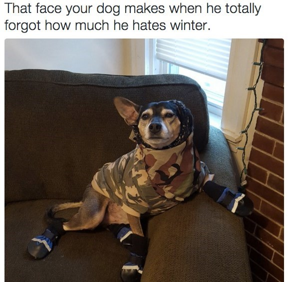 Dog - That face your dog makes when he totally forgot how much he hates winter.
