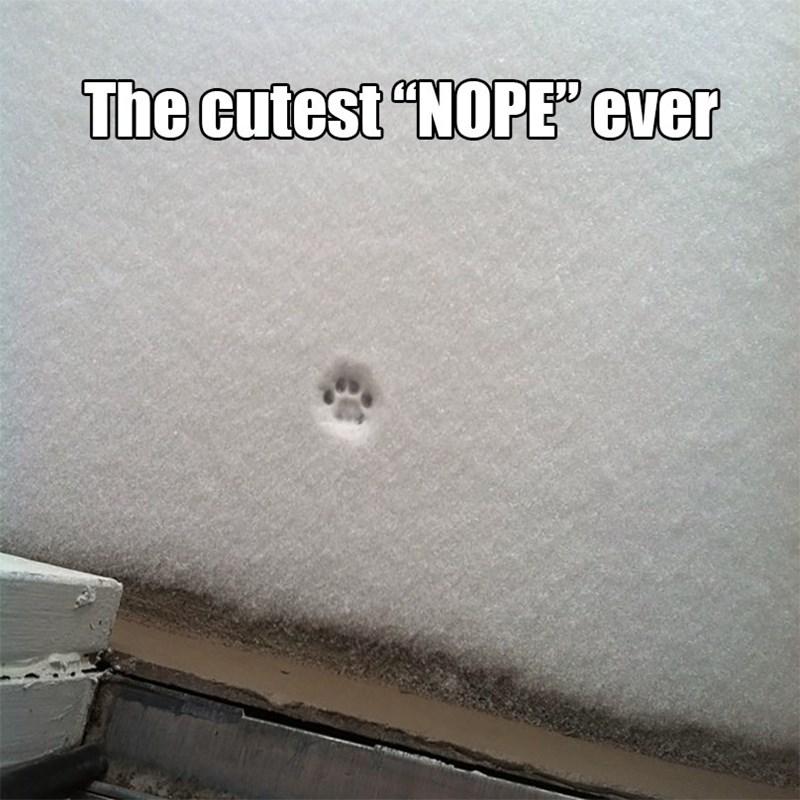 "Automotive exterior - The cutest ""NOPE"" ever"