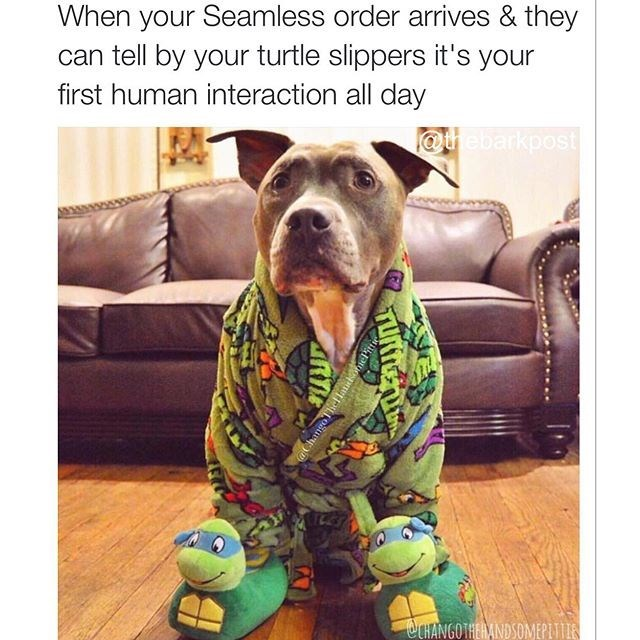 Dog - When your Seamless order arrives & they can tell by your turtle slippers it's your first human interaction all day @thebarkpost OCHANGOTHERANDS
