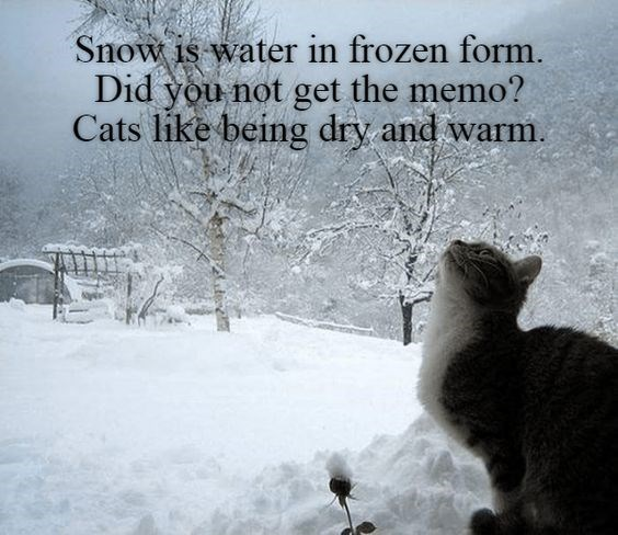 Snow - Snow is water in frozen form Did you not get the memo? Cats like being dry and warm.