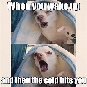 Canidae - When youwake up and then the cold hits you
